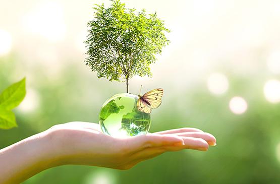 Environment_555x365